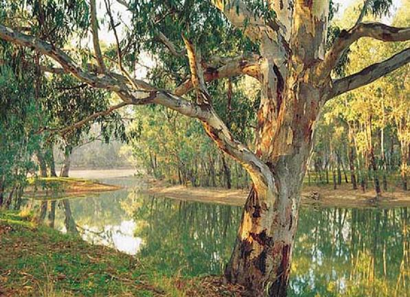 Murray River at Corowa image
